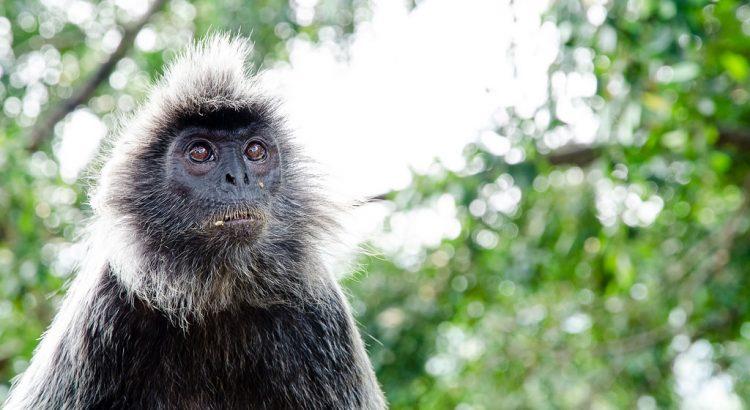 Monkey at Bukit Malawati Kuala Selangor